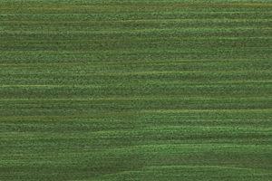 Osmo 729 zielen choinkowa